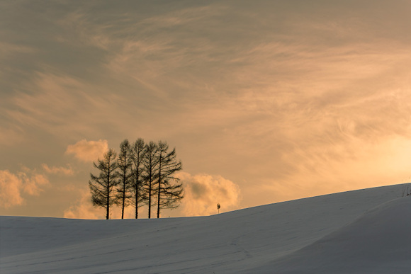 arashi five trees