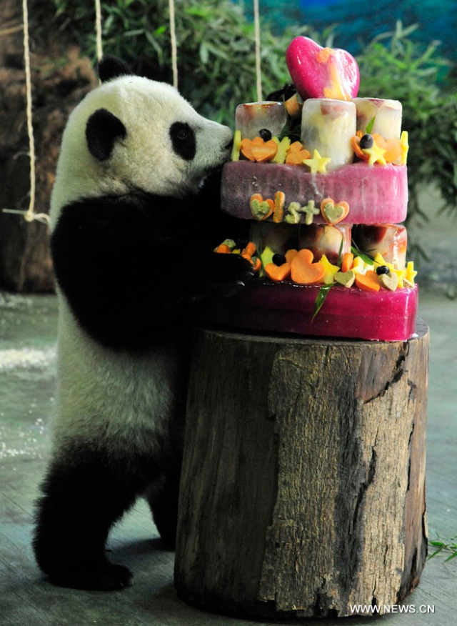 "#CHINA-TAIPEI-GIANT PANDA ""YUANZAI""-BIRTHDAY (CN)"
