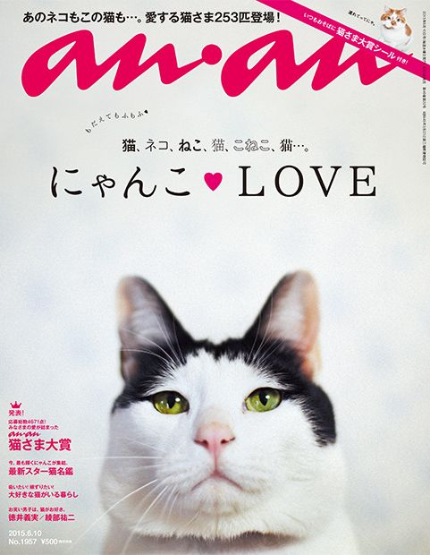 anan cat